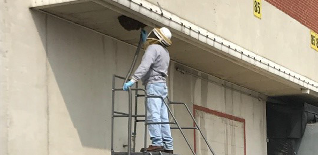 Georgia-Pacific's Green Bay Broadway mill rescues over 14,000 bees